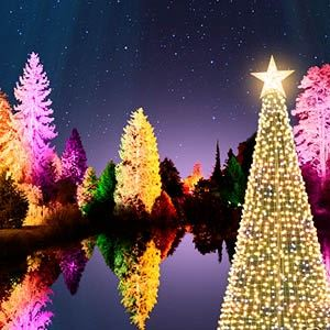 Christmas At Bedgebury