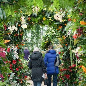Coach + Kew Gardens Orchid Festival - North Essex