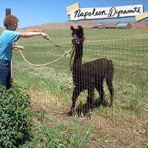Flippin' Sweet Napoleon Dynamite Party