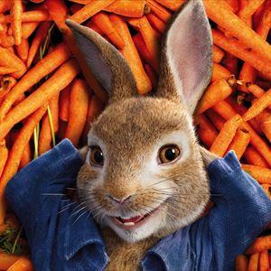 Peter Rabbit & The Great Bunny Bop - SUNDAY