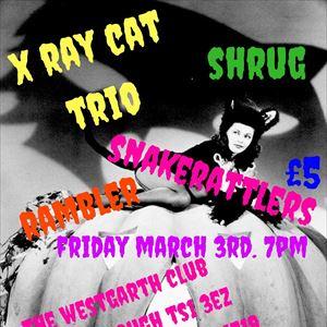 X Ray Cat Trio