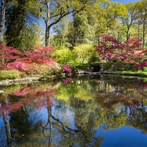 21st Century ABBA - Exbury Gardens