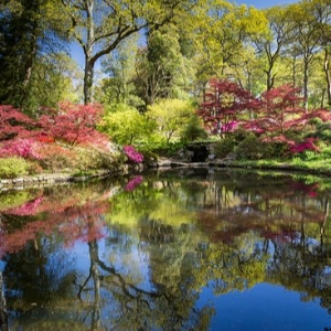 A Midsummer Night's Dream - Exbury Gardens