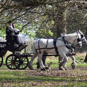 Winter Rides In Richmond Park